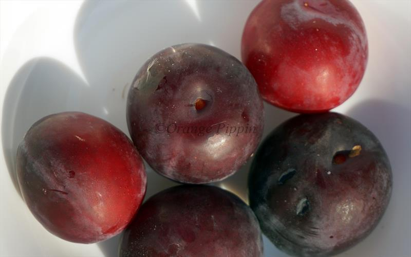Countess cherry plums